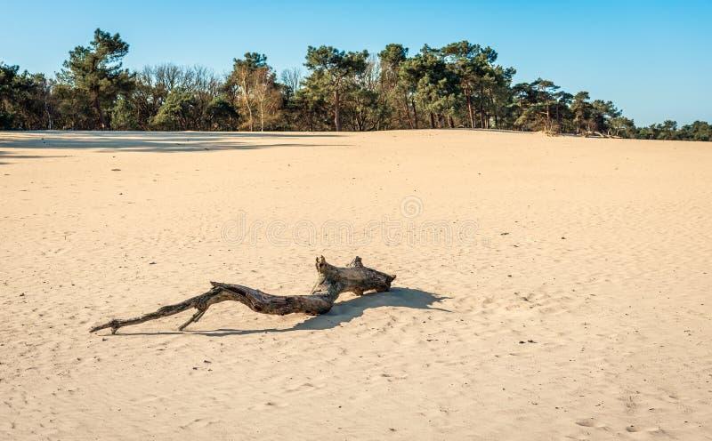 Tronc d'arbre dess?ch? dans le sable d'un secteur comme un d?sert images stock
