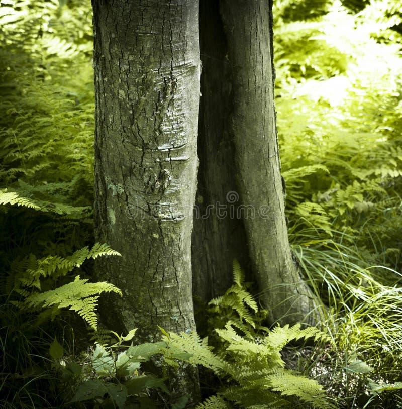 Tronc d'arbre fendu image stock