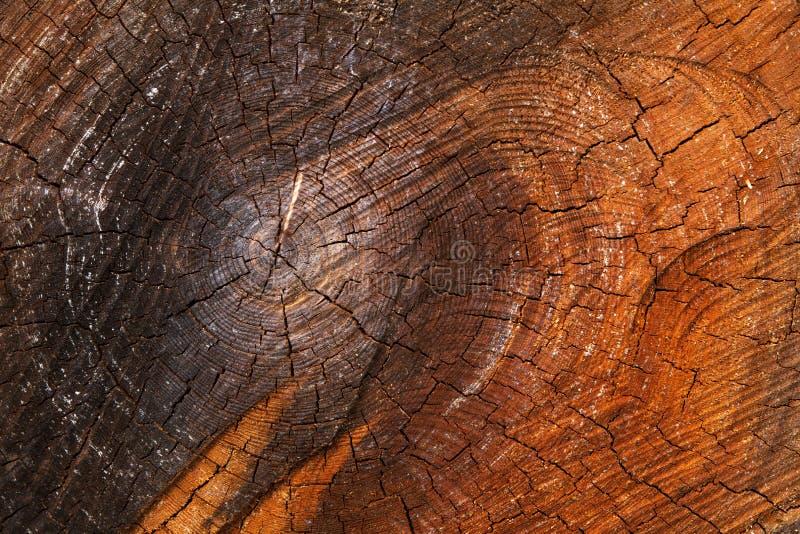 Tronc d 39 arbre minable de coupe image stock image du brun image 30707319 - Tronc d arbre coupe ...