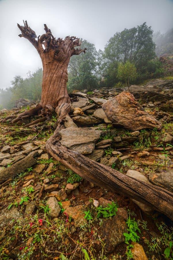 Tronc d'arbre mort froissé photographie stock
