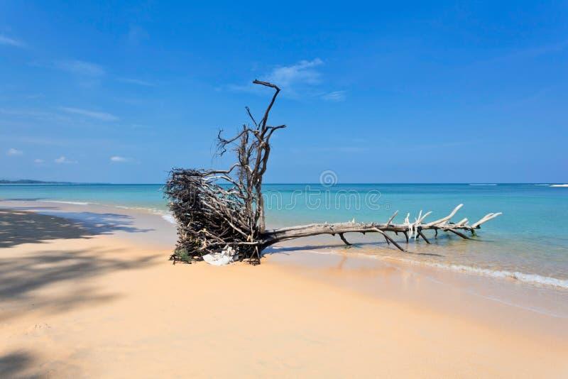 Tronc d'arbre mort sur la plage photographie stock