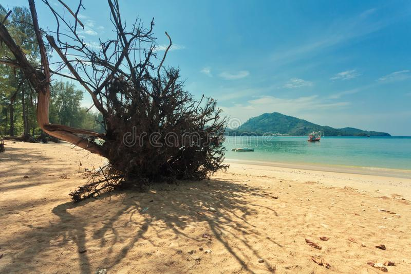 Tronc d'arbre mort sur la plage images libres de droits
