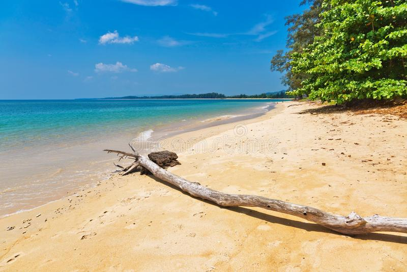 Tronc d'arbre mort sur la plage photos stock
