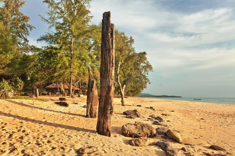 Tronc d'arbre mort sur la plage photo stock
