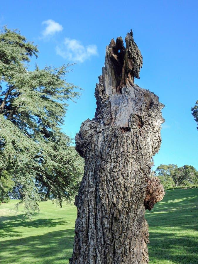 Tronc d'arbre nu photos libres de droits