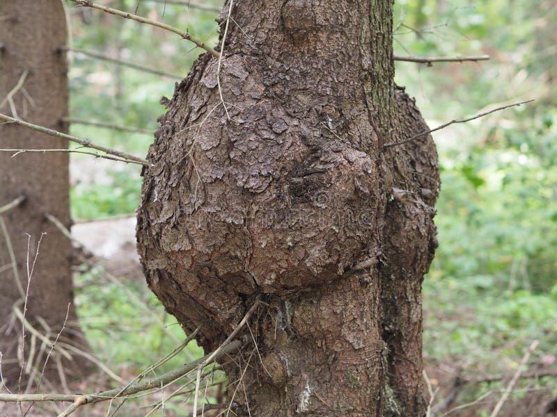 Tronc d'arbre peu commun avec des montées subites photo libre de droits