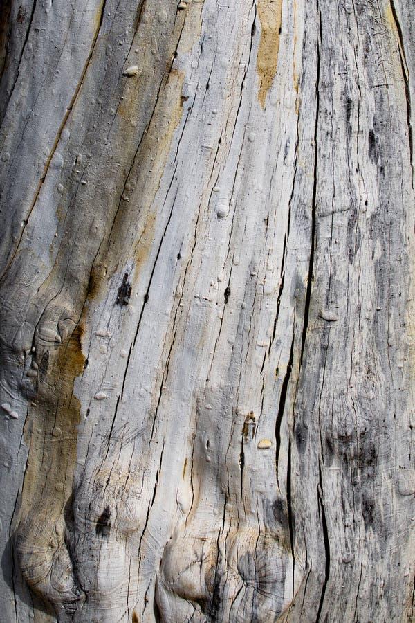 Tronc d'arbre sec par temps photo libre de droits