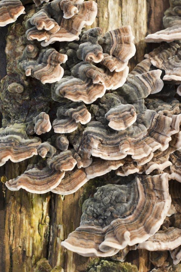 Tronc d 39 arbre superficiel par les agents avec des champignons image stock image du vert for t - Champignon sur tronc d arbre ...