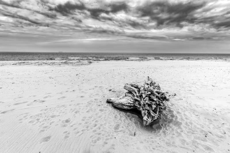 Tronc d'arbre sur la plage Jour nuageux et orageux image stock
