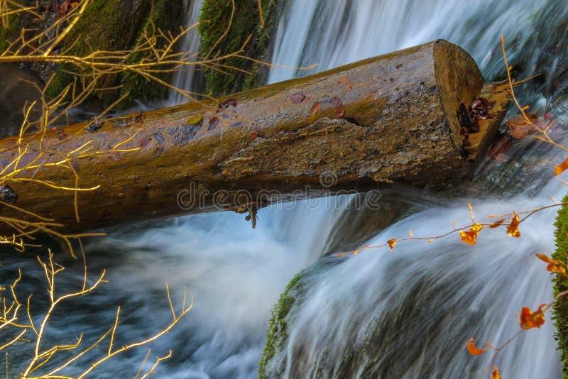 Tronc de cascade photos stock