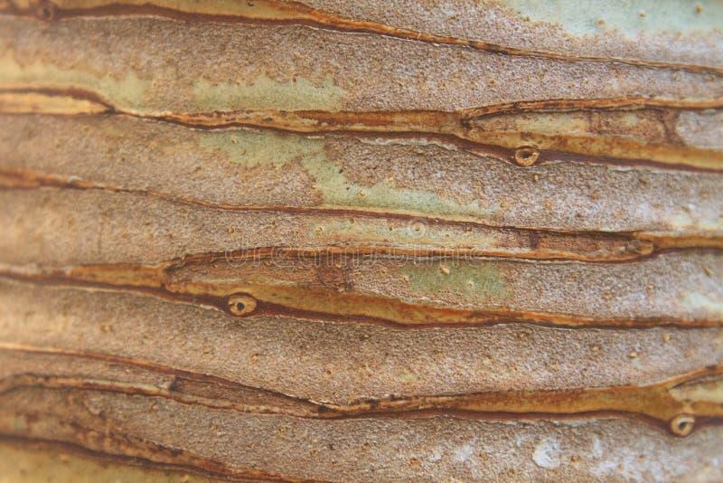 Tronc de fond et de texture d'arbre de Dracaena photo libre de droits