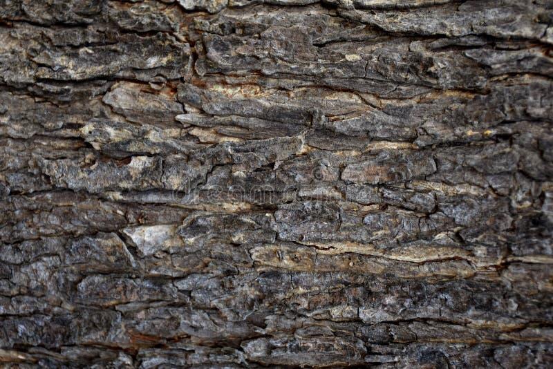 Tronc de fond naturel de texture d'écorce d'arbre images stock