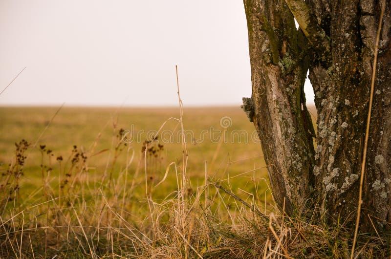 """Tronc de l'herbe """"n """" photographie stock libre de droits"""