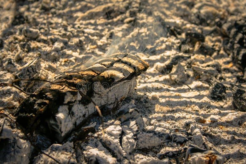 Tronc de Mader couvant parmi des cendres image stock