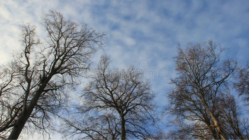 Tronc et tige de nature Arbre sans feuilles en hiver et ciel nuageux photos stock