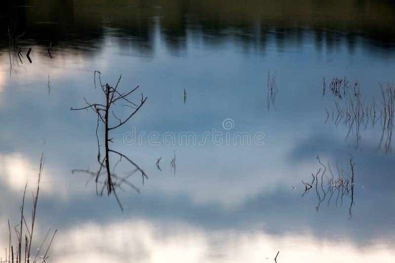 Tronchi in acqua con le riflessioni del cielo in un lago immagini stock