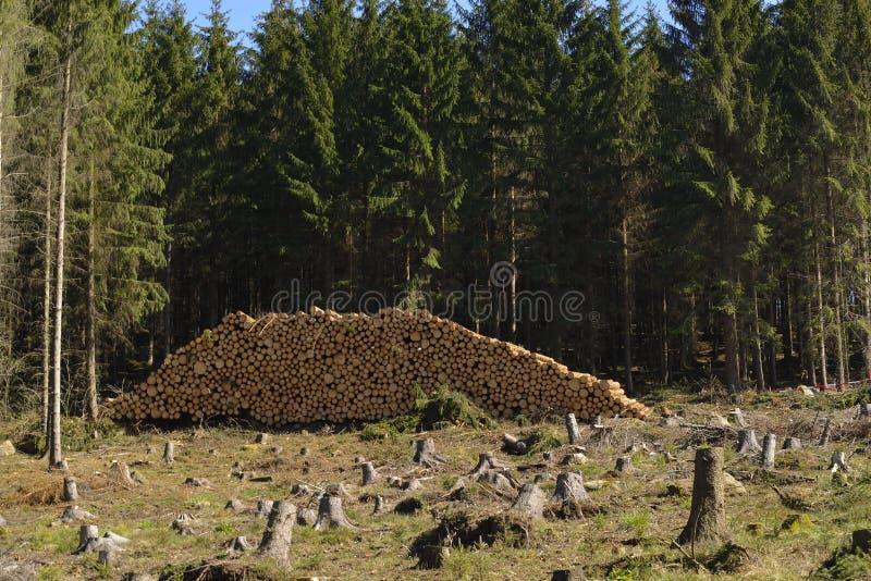 Tronchi attillati nella foresta fotografia stock