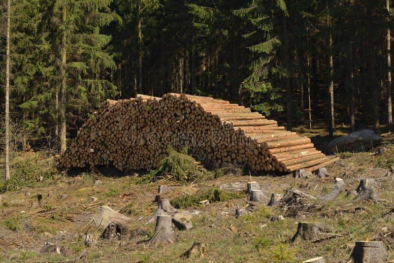 Tronchi attillati nella foresta fotografie stock