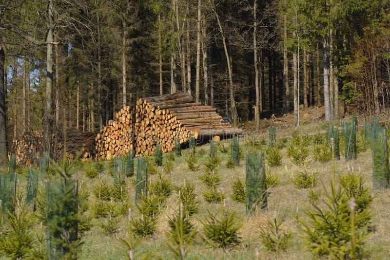 Tronchi attillati nella foresta immagini stock