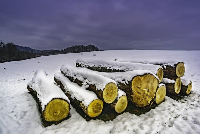 Tronchi degli alberi abbattuti nell'inverno fotografie stock