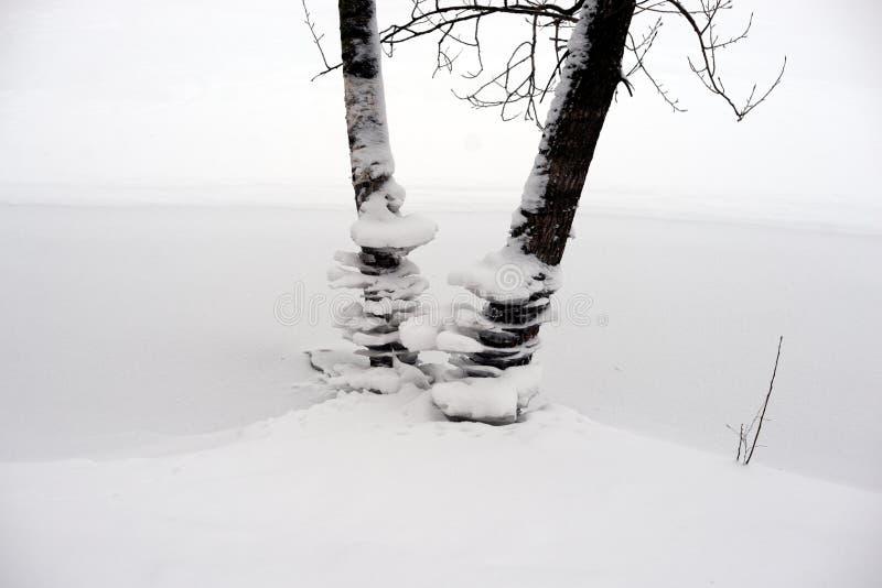 Tronchi degli alberi all'inverno fotografie stock