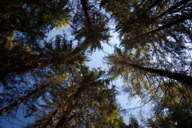 Tronchi degli alberi in foresta attillata immagine stock