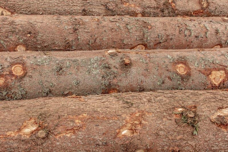 Tronchi del fondo degli alberi L'albero registra l'abbattimento di Forest Fire Wood Logs immagine stock