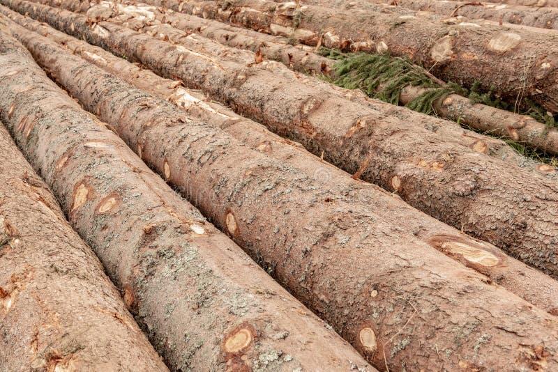 Tronchi del fondo degli alberi L'albero registra l'abbattimento di Forest Fire Wood Logs fotografia stock