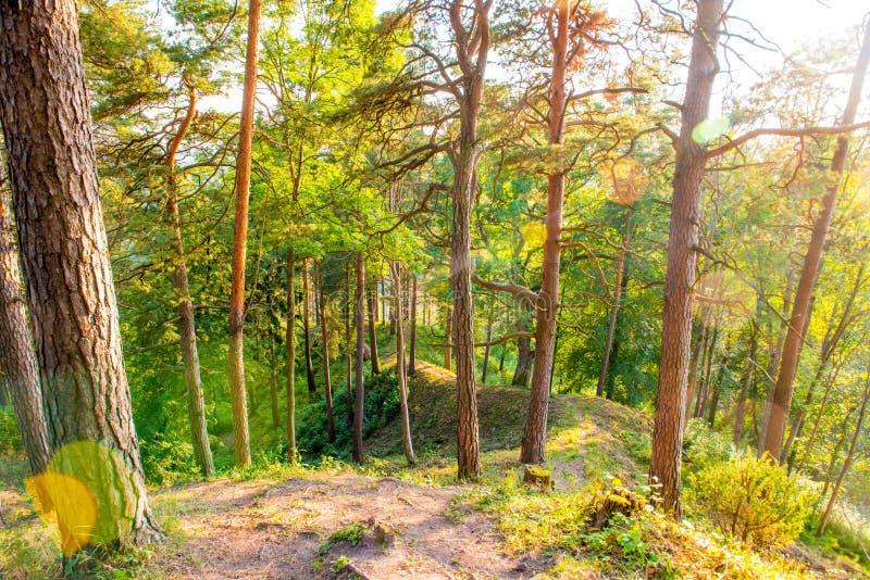 Tronchi dell'albero forestale fotografie stock