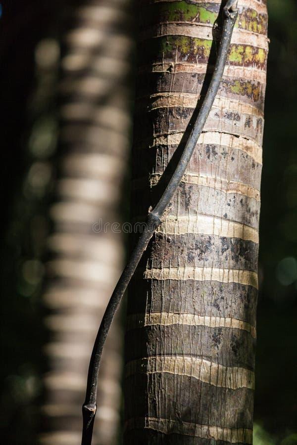 Tronchi della palma fotografia stock libera da diritti