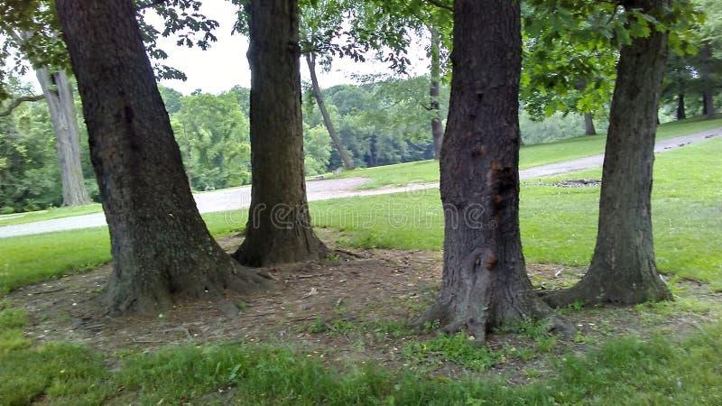Tronchi di albero fotografie stock libere da diritti