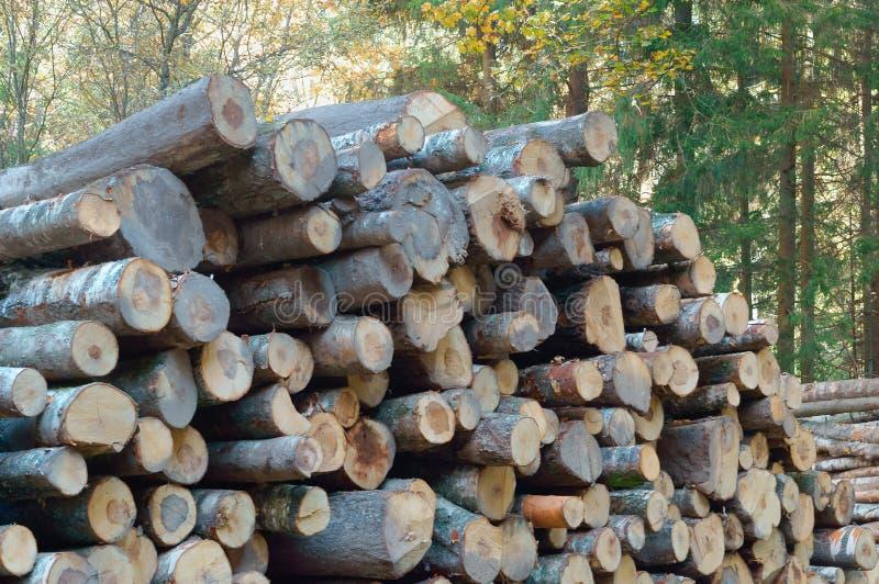 Tronchi di albero abbattuti, ceppi impilati sopra a vicenda, disboscamento, disboscamento immagini stock libere da diritti
