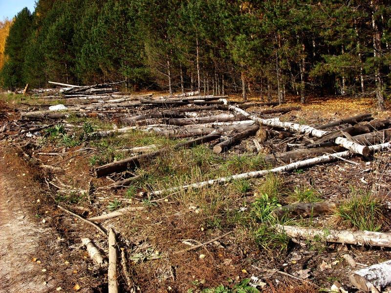 Tronchi di albero abbattuti impilati in un mucchio fotografia stock libera da diritti