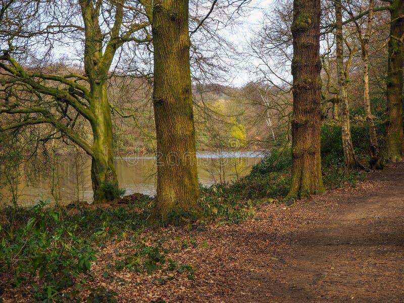 Tronchi di albero accanto ad un percorso del terreno boscoso immagine stock libera da diritti
