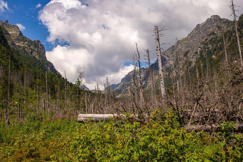 Tronchi di albero asciutti sulle montagne fotografie stock libere da diritti