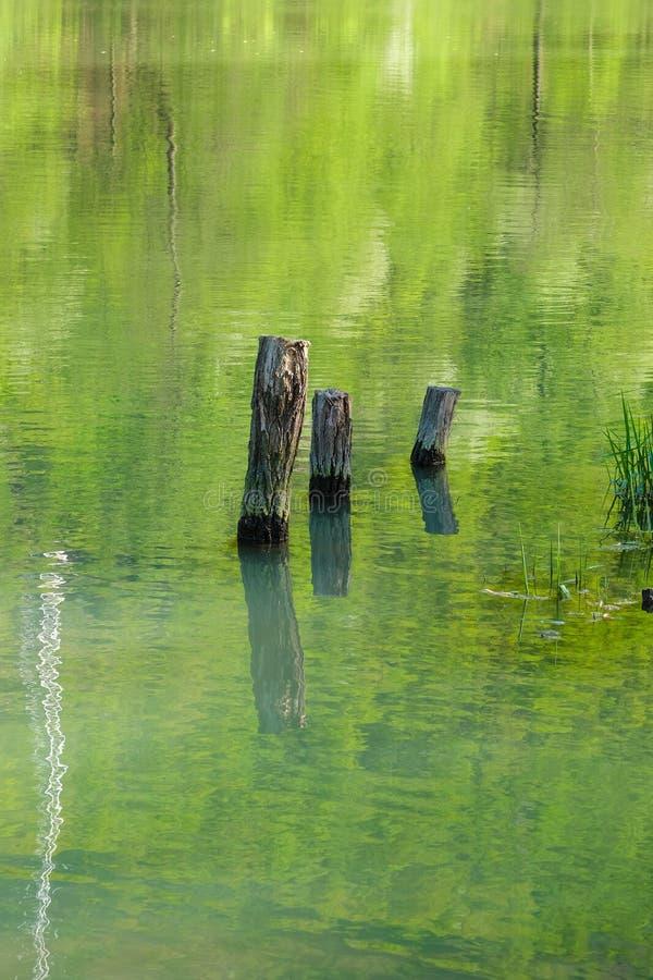 Tronchi di albero che attaccano dal fiume immagini stock