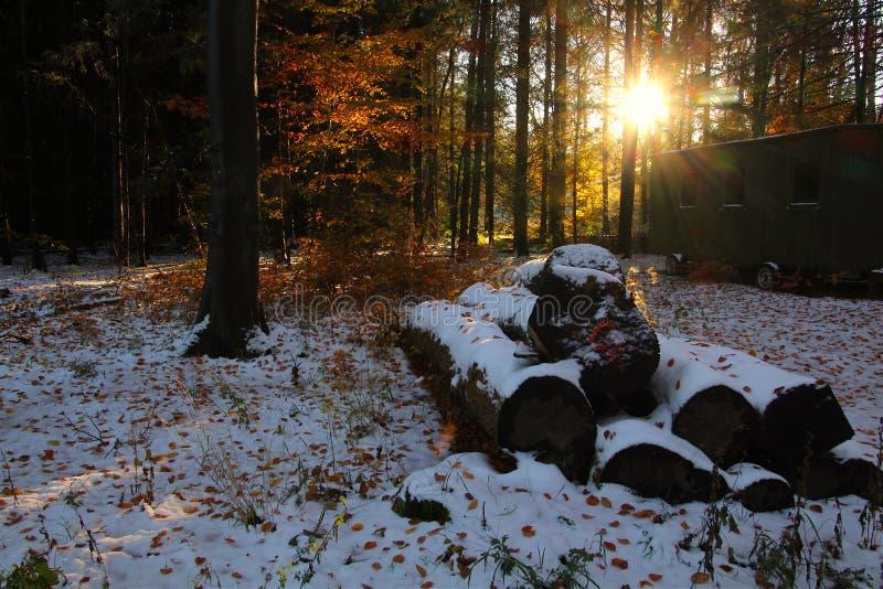 Tronchi di albero coperti di neve immagine stock