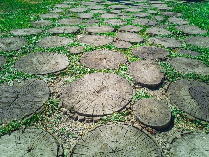 tronchi di albero 110-Cut fotografie stock libere da diritti