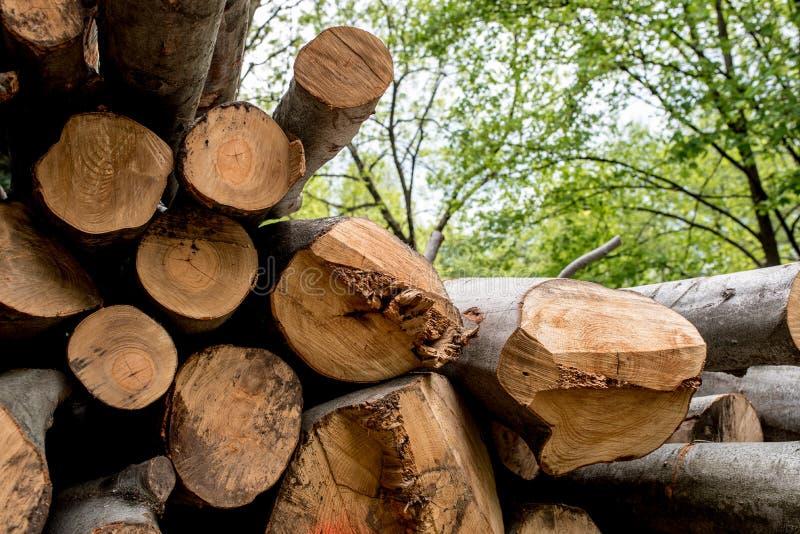 Tronchi di albero differenti tagliati sopra a vicenda fotografia stock