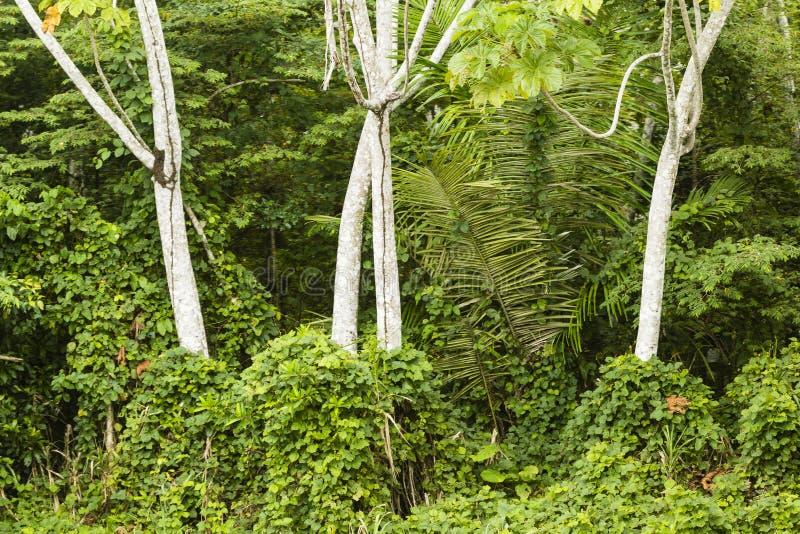 Tronchi di albero e cespugli verdi immagine stock libera da diritti