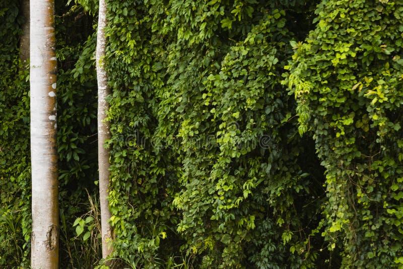 Tronchi di albero e cespugli verdi fotografie stock