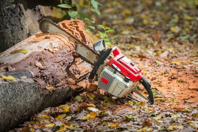 Tronchi di albero e della motosega fotografia stock libera da diritti