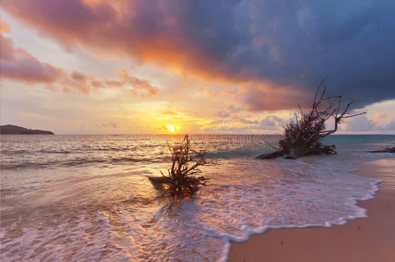 Tronchi di albero morti nelle onde del mare fotografie stock libere da diritti