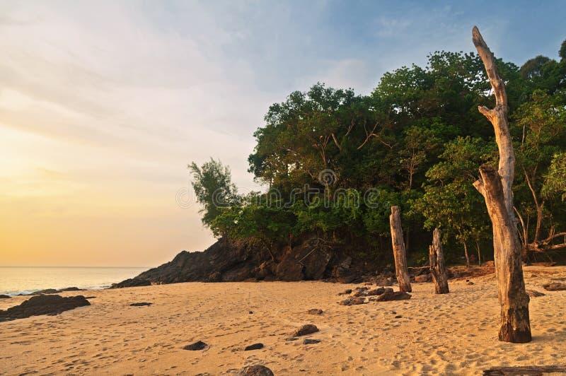 Tronchi di albero morti sulla spiaggia tropicale fotografia stock