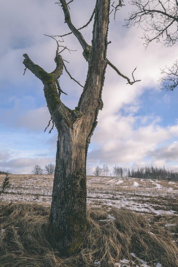 Tronchi di albero soli in foresta di estate - sguardo d'annata del film fotografie stock