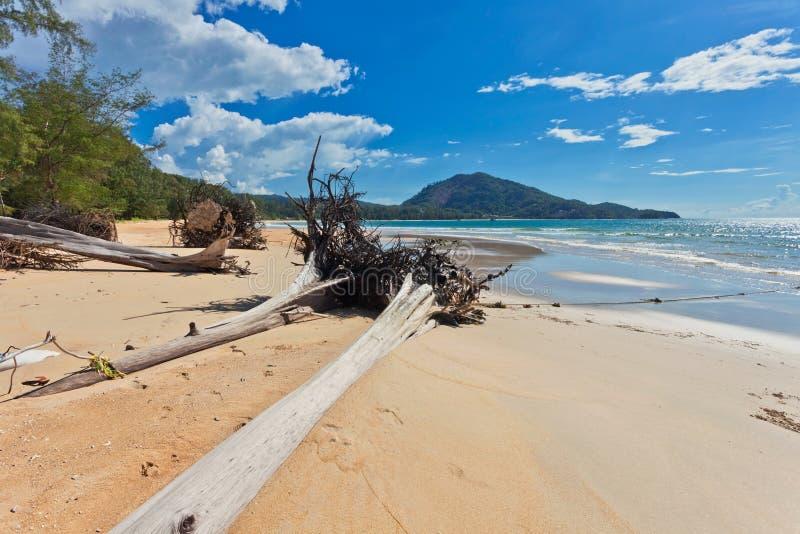 Tronchi di albero sulla spiaggia immagine stock libera da diritti