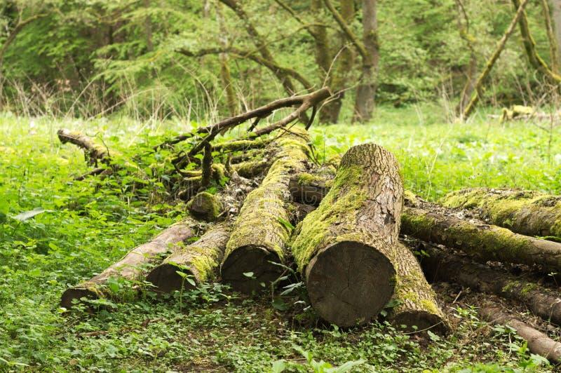 Tronchi di legno nella foresta sull'erba - legna da ardere Germania immagine stock