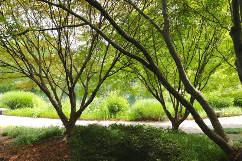 Tronchi e rami di albero sopra pianta ed acqua fotografia stock libera da diritti