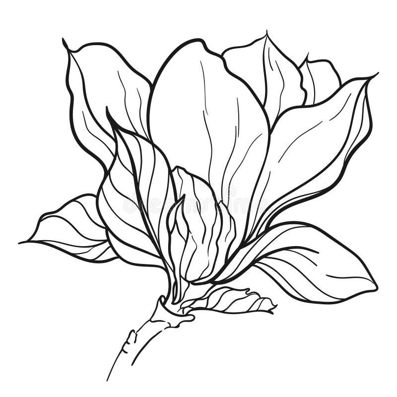 Tronco con la flor, los brotes adornados y las hojas de la magnolia aislados en el fondo blanco libre illustration