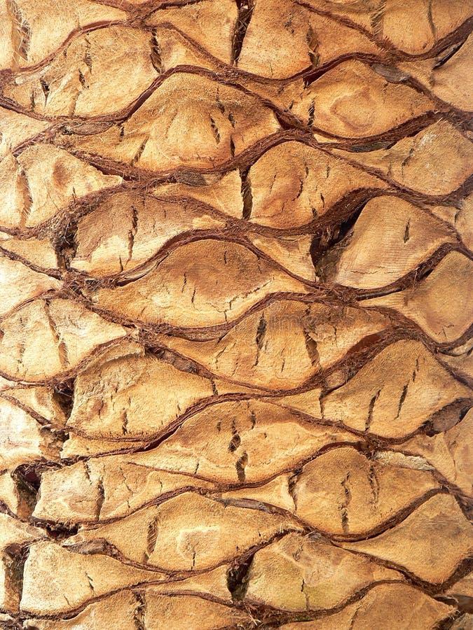 Tronco da palmeira fotos de stock royalty free